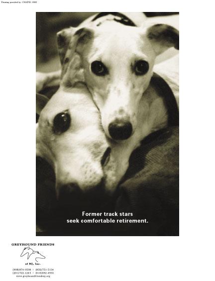 Greyhound Friends
